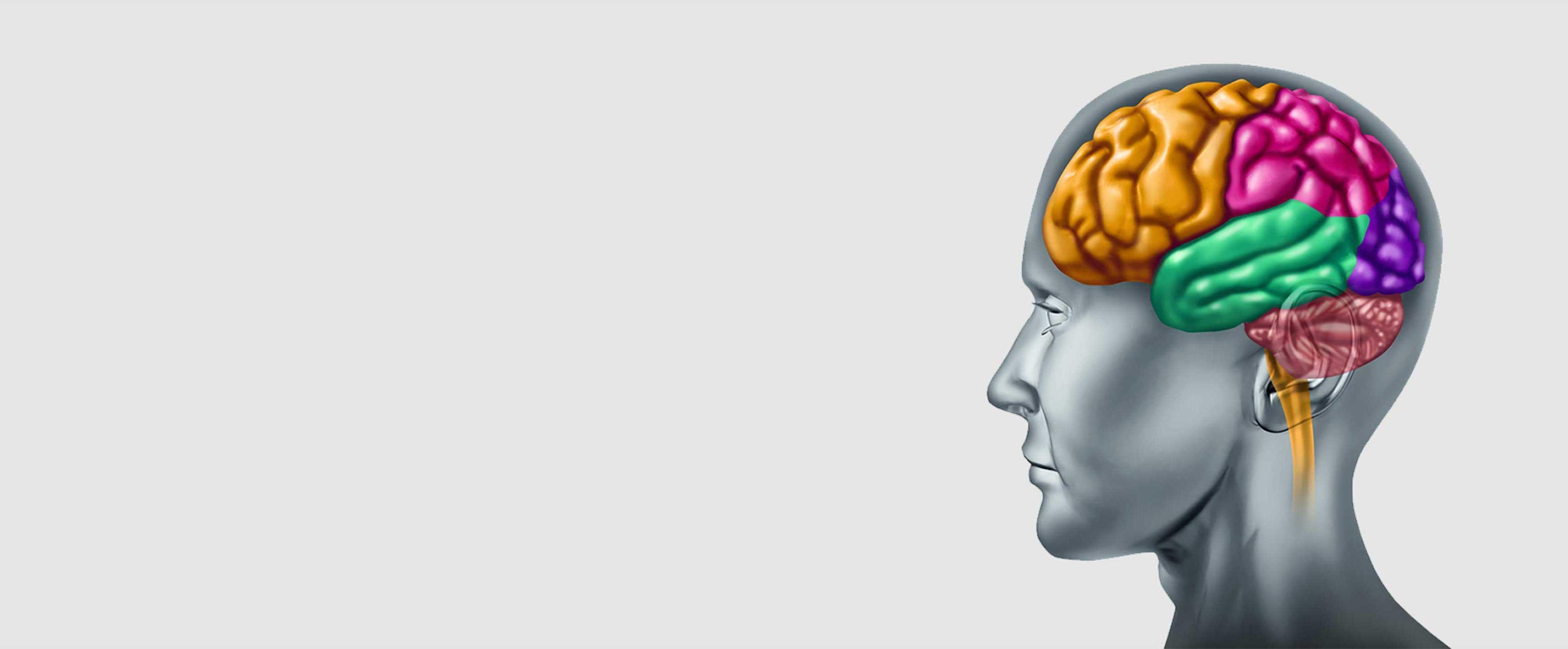 人脑的图像,表示患者在驱动科学和医学研究与开发中的意志和脑力。