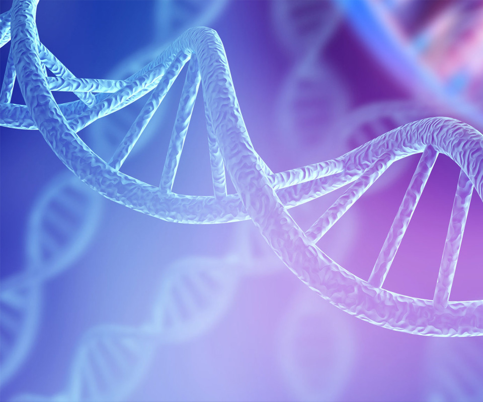 An image of the DNA